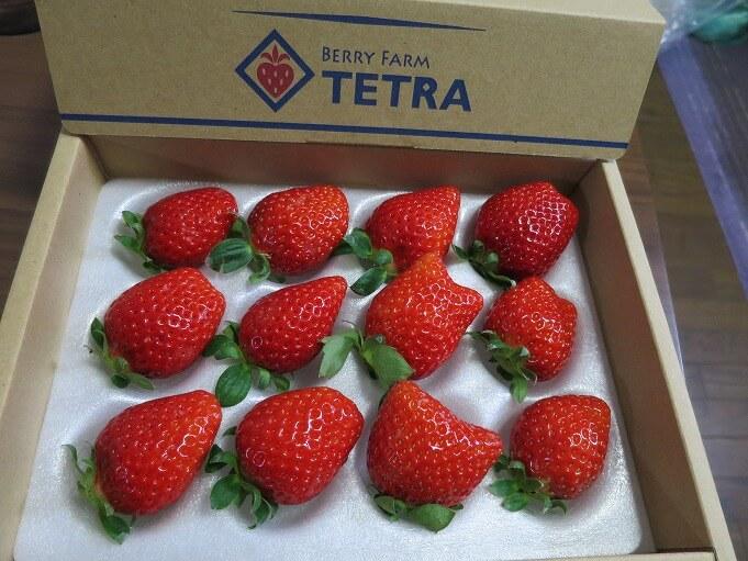 Berry Farm TETRA(ベリーファームテトラ)について